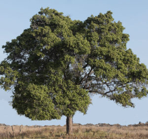 Les 12 arbres symboles du calendrier des xia taopratique - Arbre sans racine envahissante ...